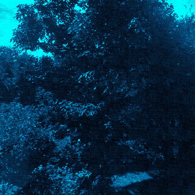 昼なお暗い森